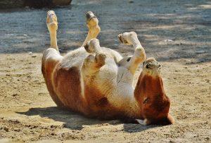 donkey-1342350_960_720